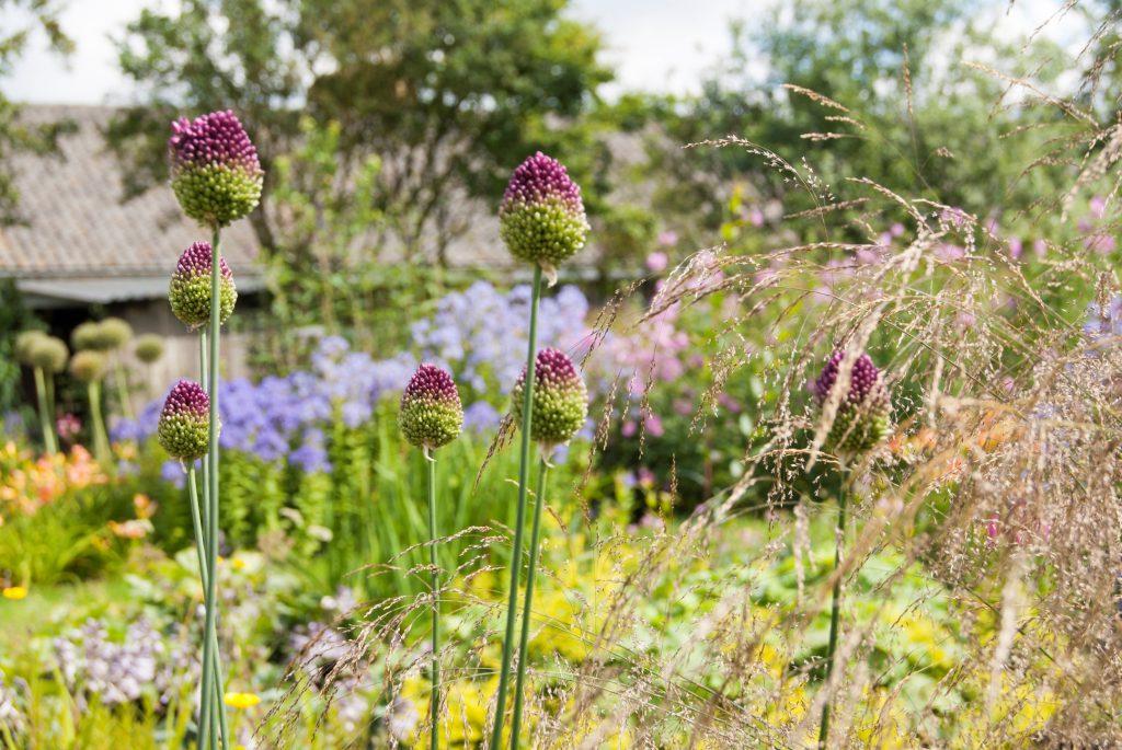 Bloemrijke tuin 01