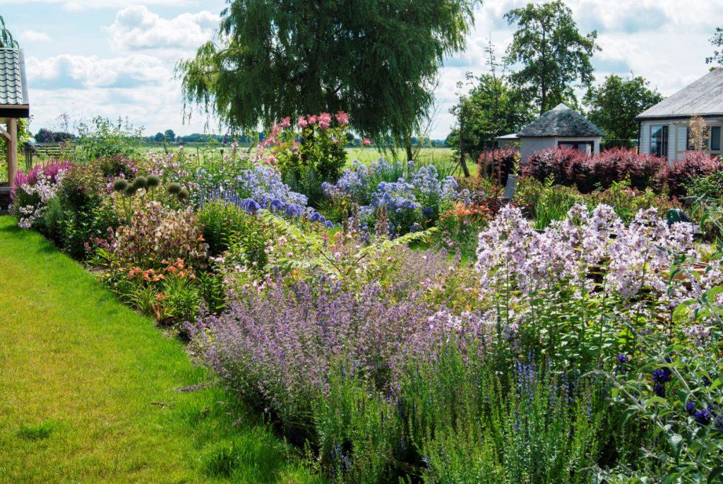Bloemrijke tuin 06
