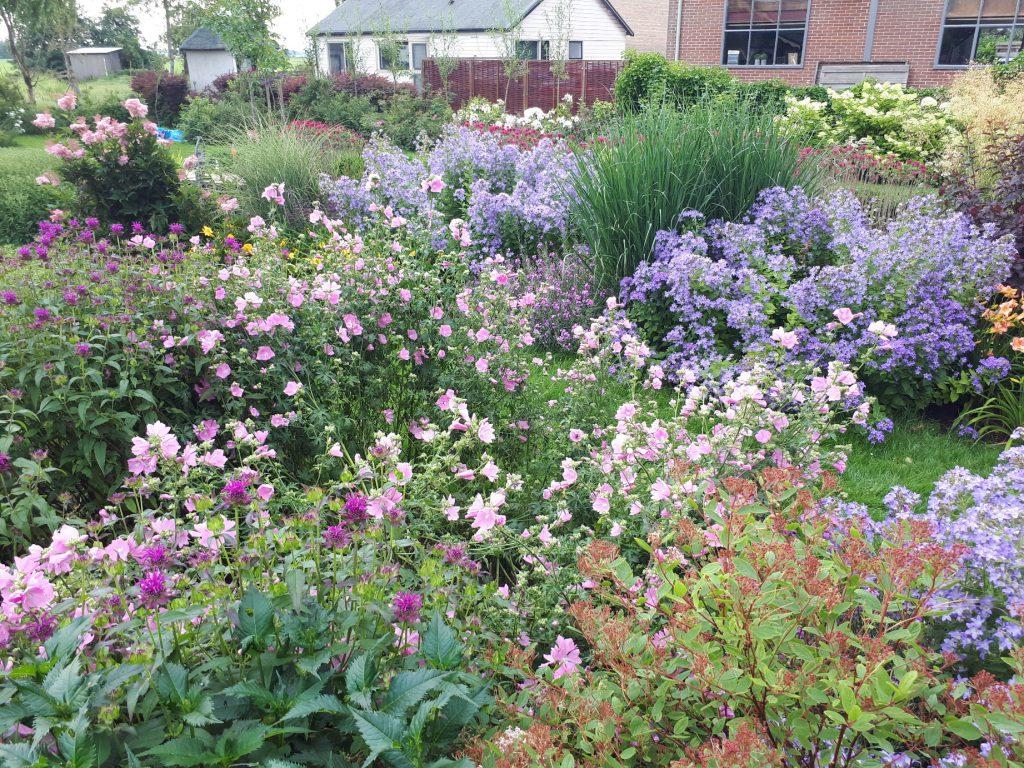 Bloemrijke tuin 10
