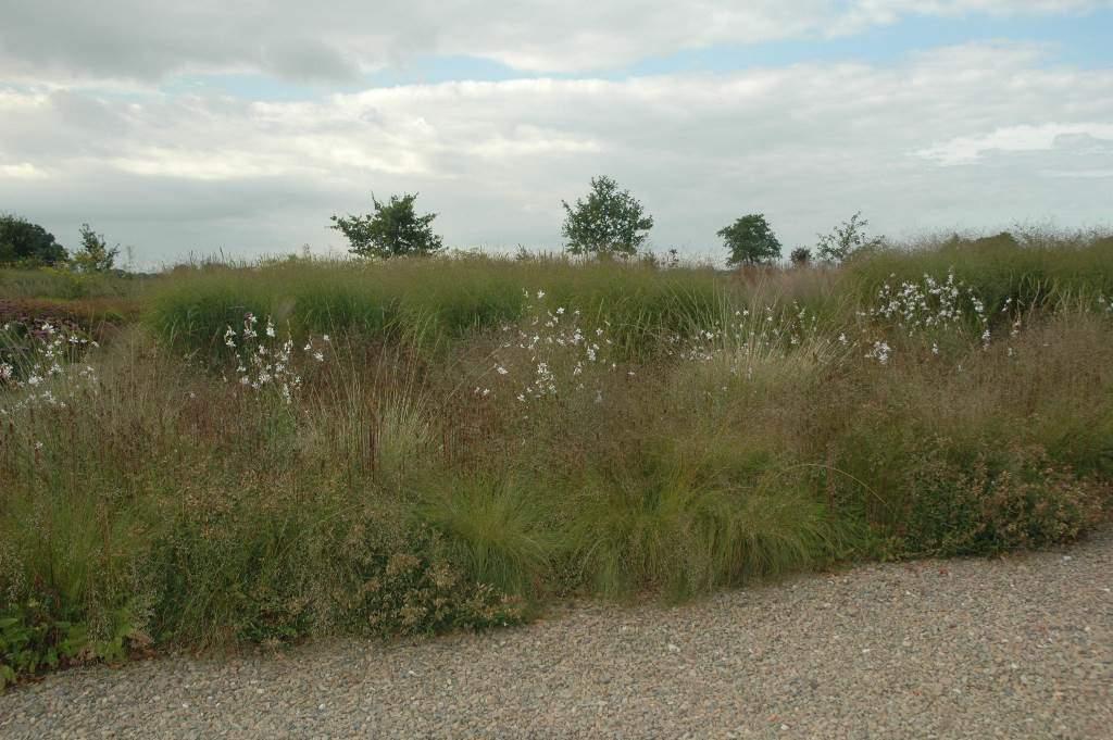 02 Prairiebeplanting 1