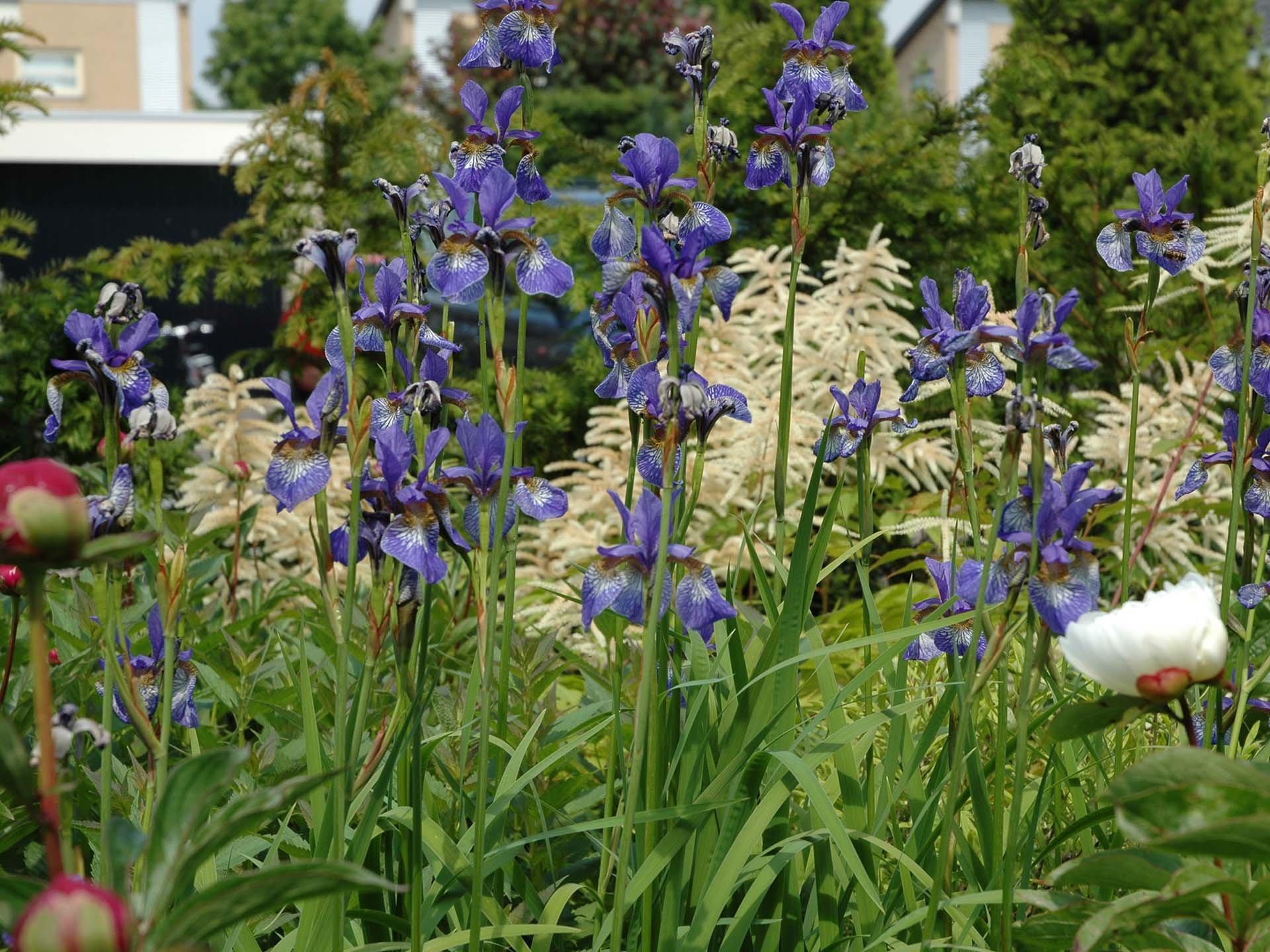Tips beplantingsplan tuin