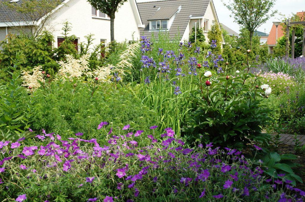 Bloemrijke tuin 12