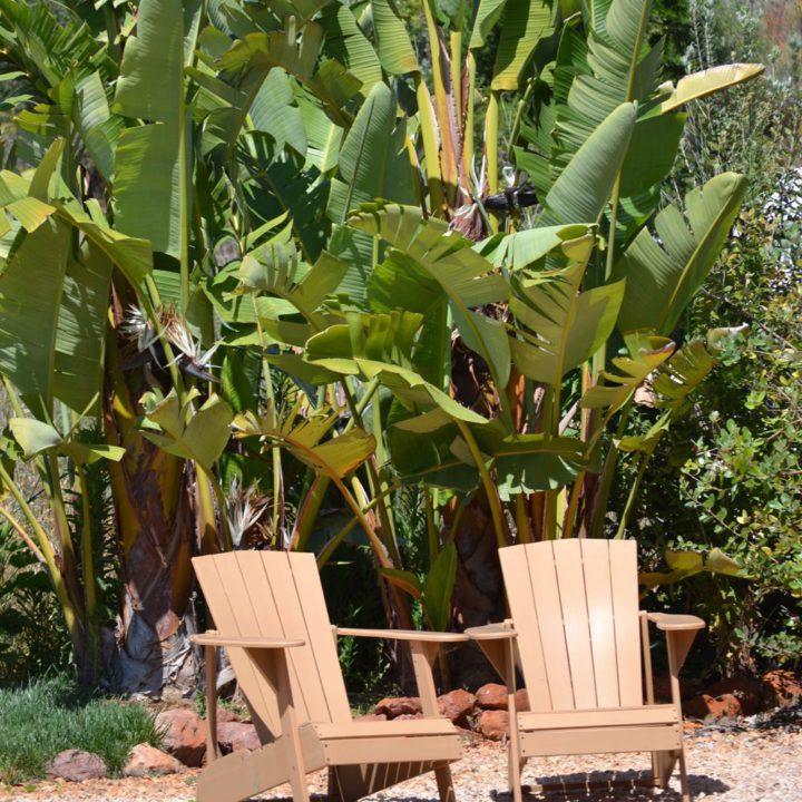 Bananenboom en zwembad